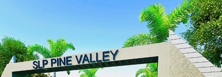 Slp Pine Vally