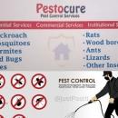 Pestocure